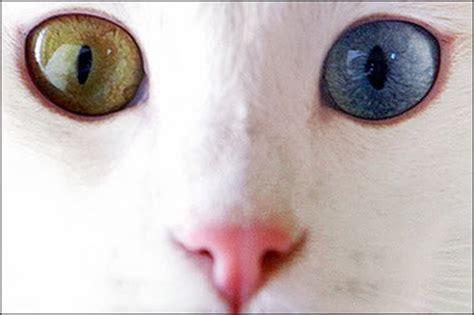 Boneka Kucing Cat 3 Colour Big Eye 9 god s january 2010