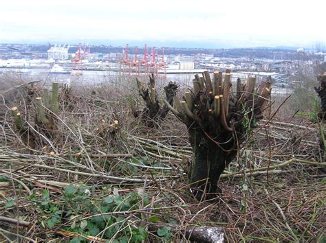 city west seattle city settles with west seattle homeowners cutting trees seattle met