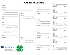 Rabbit Pedigree Template by Understanding Pedigrees Of Your Market Rabbits