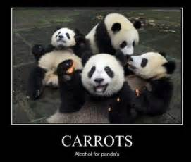 Panda bear funny 9 china needs to quit hoggin all the pandas 26