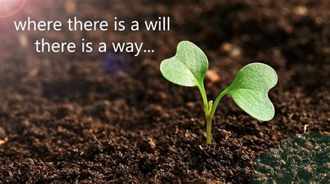 Where There S A Will where there is a will there is a way meaning and proverb