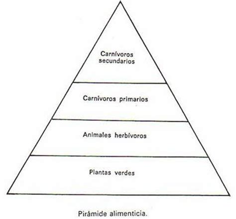 cadena trofica definicion pdf imagen de la piramide de la cadena alimenticia imagui