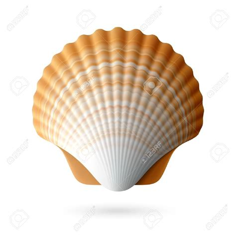 seashell color clams clipart scallop shell pencil and in color clams