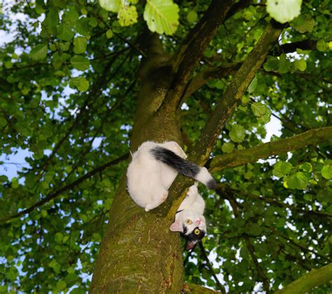 Adidas Nmd Bape White Green Putih Hijau gambar alam cabang hitam dan putih menanam daun bunga hewan margasatwa membelai bulu