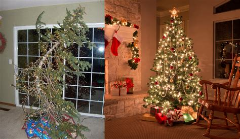 best real christmas trees by me choosing the best real tree leading news