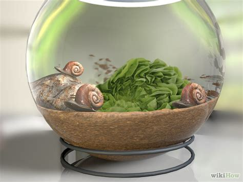 how to a pet how to breed a pet snail 7 steps with pictures wikihow
