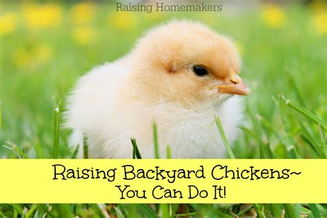 Can You Chickens In Your Backyard by Raising Backyard Chickens You Can Do It Raising Homemakers
