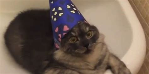 wizard cat wizard cat hangs out in bathroom sink huffpost uk