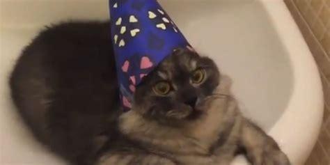 Wizard Cat Hangs Out In Bathroom Sink Huffpost Uk
