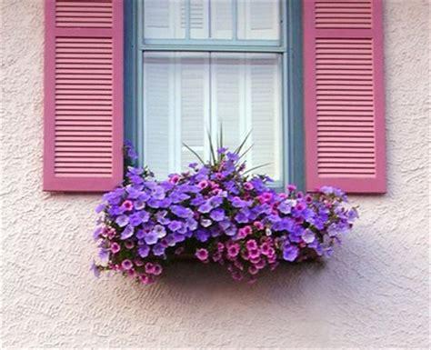 win with flower creative window box flower ideas