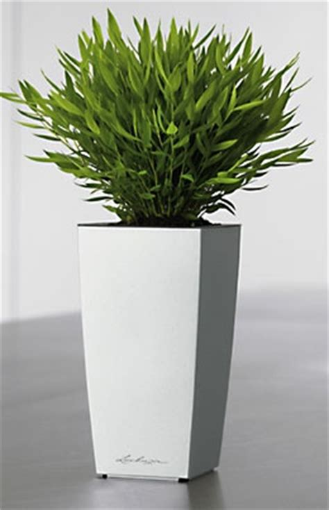 herb planter mini cube self watering herb planter indoor herbs 1000 images about indoor plants planters on pinterest