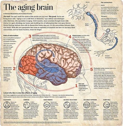 how to read comfortably the aging brain great info i had to go to the website