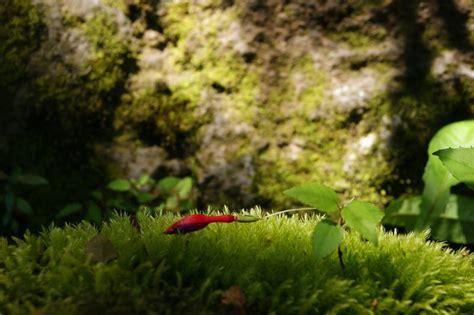 imagenes amor zen el amor y el zen comunidad soto zen de chile