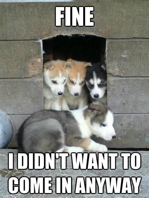 kicked puppy husky puppy gets kicked out of fort meme