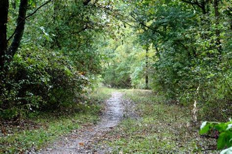Cabin Cing In Michigan by Fort Custer State Park Cing Reservations