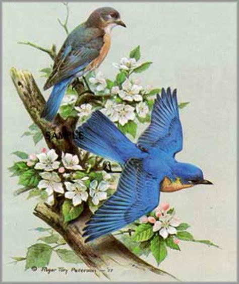 roger tory peterson blue bird birds