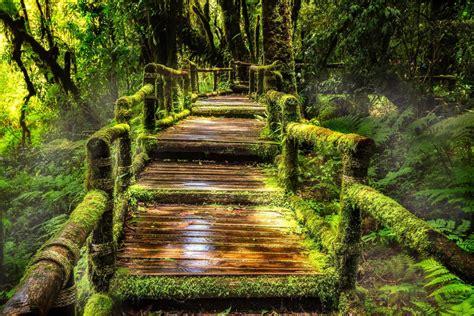 forest bridge hd wallpaper background image