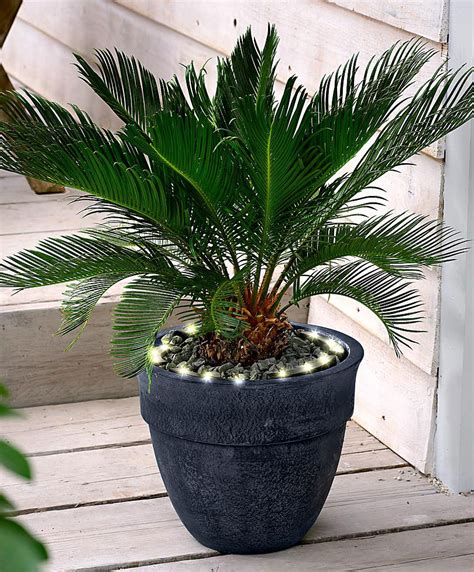 piante per fioriere acquista illuminazione per vasi e fioriere bakker