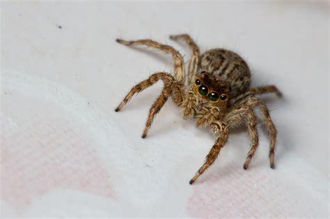 wie kommen spinnen ins haus spinnen bek 228 mpfen die besten tipps gegen spinnen im haus