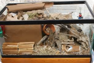 Toy Box With Bookcase Burrowing Box A Tour Of Current Gerbil Set Up Hammy