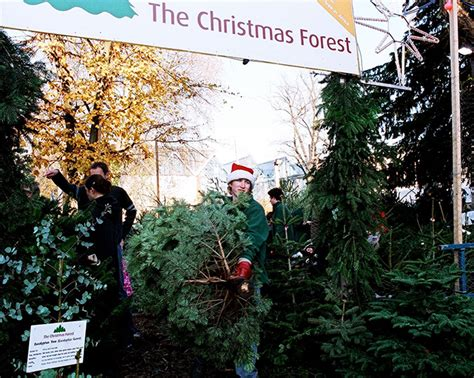 best places to buy a real christmas tree in london