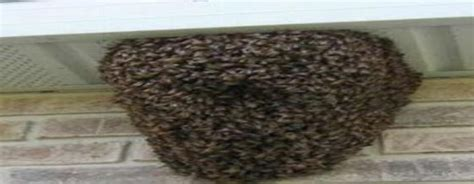 bed bug heat treatment success rate bed bug heat treatment success rate 28 images treating on or near mattresses what