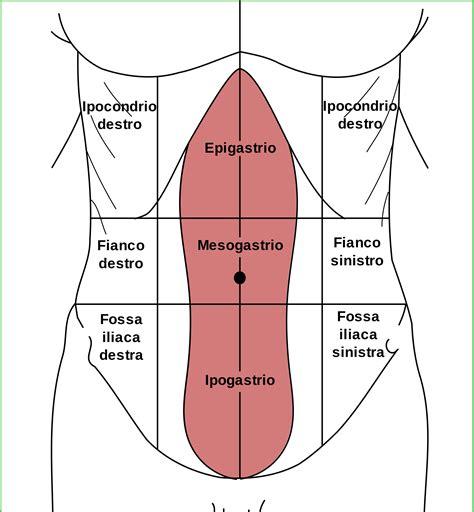 il fegato porta dolore dolore al fegato yahoo answers