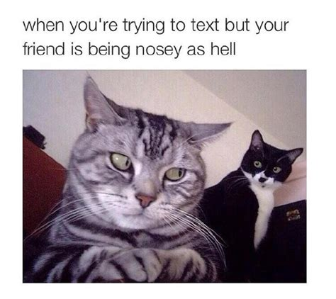 Funny As Hell Memes - nosey as hell funny pictures quotes memes funny