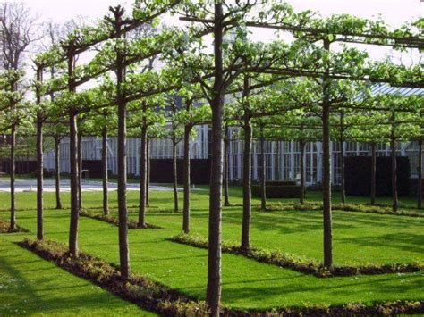 backyard apple trees 117 best images about espalier on pinterest garden ideas