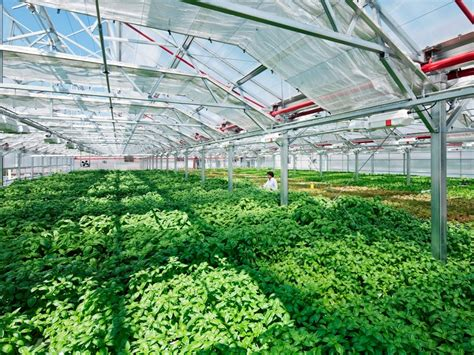 greenhouse layout electronic city world s largest rooftop greenhouse is about to open in