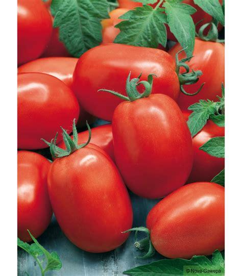 seme roma graines a semer de tomate roma