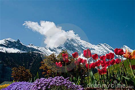 sfondilandia fiori fiori e montagne fotografia stock immagine 17024602