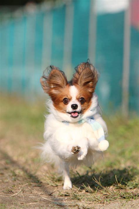 puppy running pupsmile puppy running