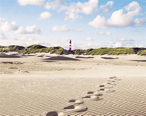 House Planner Online For amrum bird watching and mudflat tours