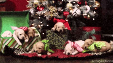 christmas presents gifs find share  giphy