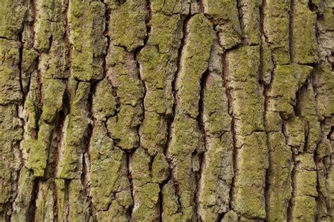 tree bark texture  image  libreshot