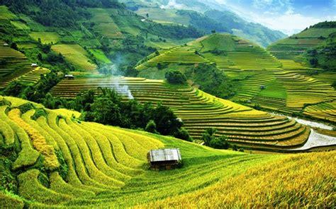Interior Designer Reisfelder In Mu Cang Chai Vietnam