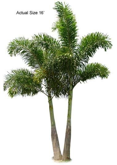 17 best images about homestead wholesale tree nursery and