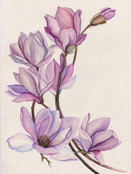 занятия по ботанической иллюстрации кухня художника и