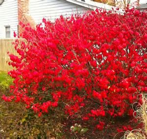 sage carl gregg every bush is a burning bush elizabeth barrett browning beautifully writes