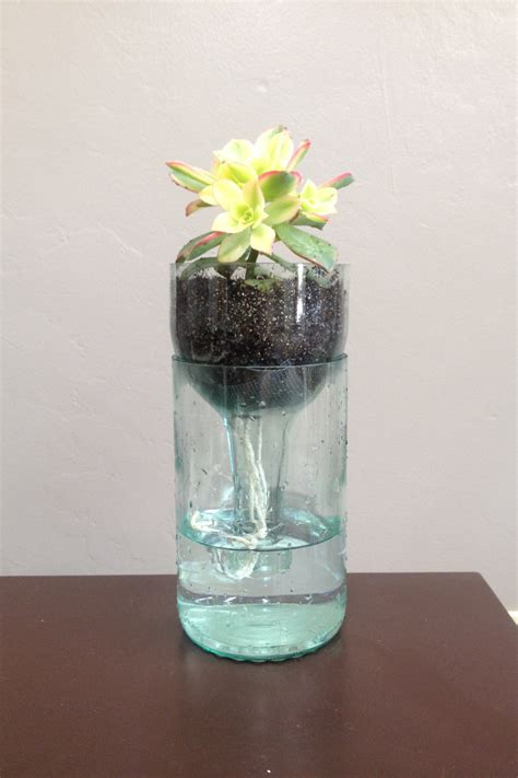 wine bottle self watering succulent planters by