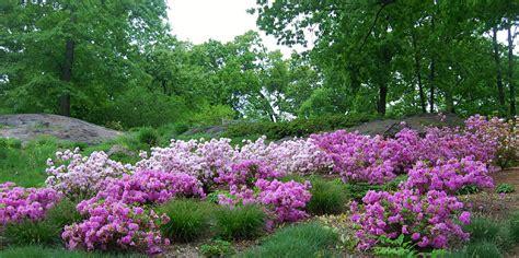 the new azalea garden at the new york botanical garden
