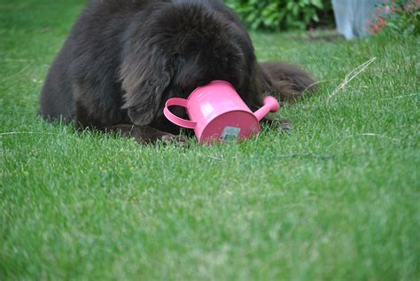 my dog has just started peeing in the house the dog pee garden take 2 mybrownnewfies com