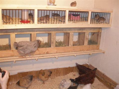 quail house plans bobwhite quail brooder house plans house design ideas