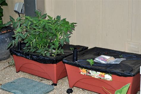 City Pickers Planter by City Pickers Update Week Three Gardening Nirvana