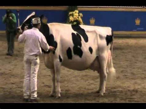 Jeany Green canada national holstein show longtime production