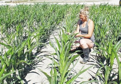 Wright State Mba Start Date by Agriculture Student Sets Sights On Establishing Ag Career