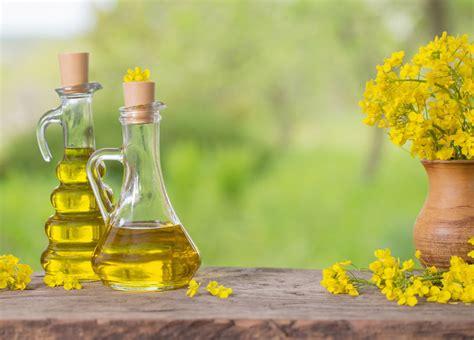 olio di colza alimentare olio di colza cos 232 propriet 224 principali utilizzi