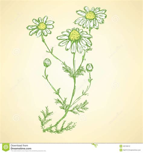 style flower daisy flower in sketch style stock illustration image
