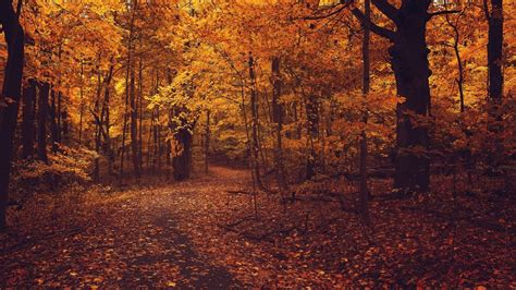 autumn landscapes 2 wallpapers colorful fall landscapes forests nature landscapes autumn fall trees spectacular